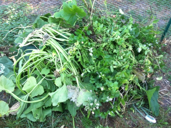 This is about half of the garden scraps we have so far. All going into our compost bin!