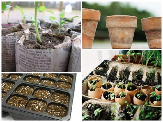 seedgrowing